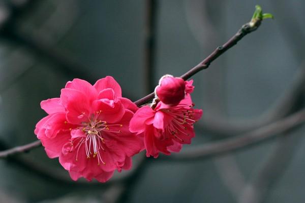 Để hoa nở rộ đẹp đúng dịp Tết hãy bổ sung thêm dinh dưỡng cho hoa