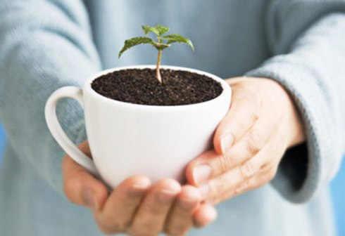 Dùng bã cà phê làm phân bón cho cây là mẹo vặt gia đình ít biết