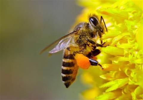 Sơ cứu khi bị ong chích